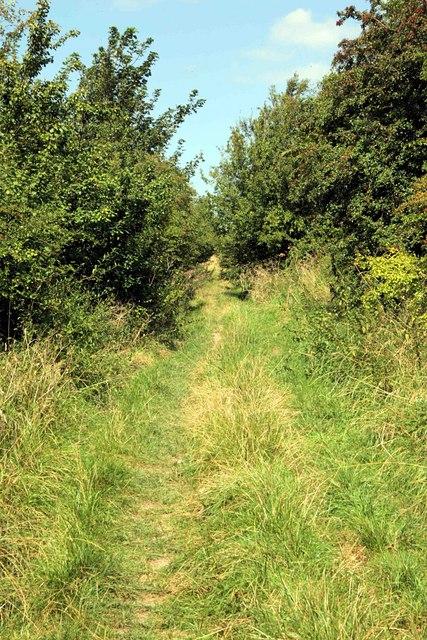 Ancient Trackway