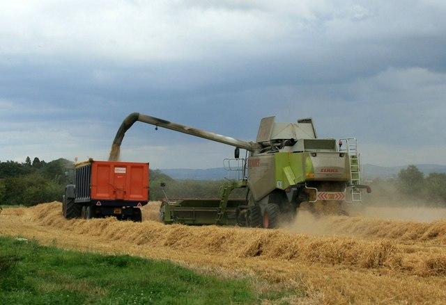 Barley Mowing, Lower Westwood