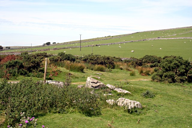 Hillside Grazing by Wardbrook Farm
