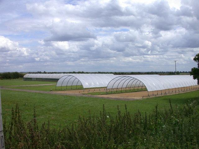Large Polytunnels at Engine Farm