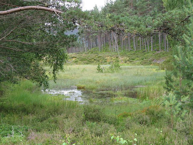 Marsh, Inshriach