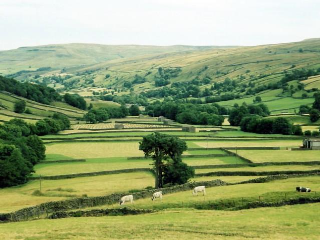 Haymaking at Thwaite