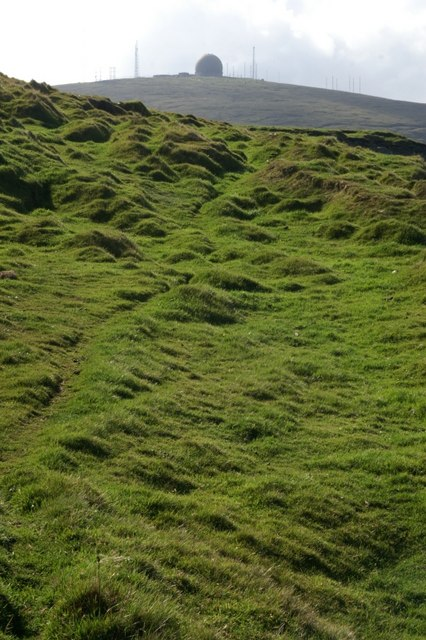 Tussocky clifftop grassland above cliffs at the back of Skaw