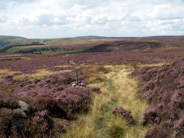 Tintwistle Low Moor