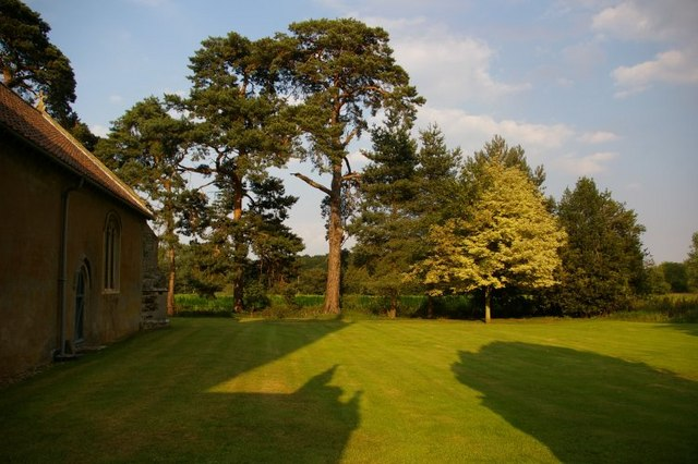 Pine trees in churchyard of St Mary's, Stradsett