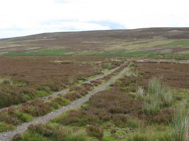 Track towards Muggleswick Common