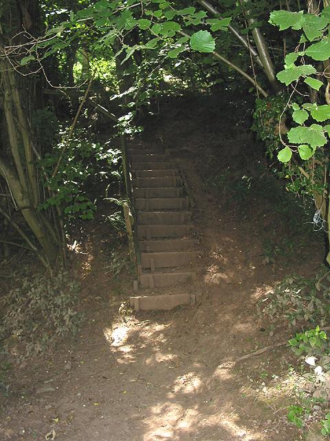 Footpath steps into Thomas Wood