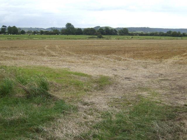 Somerton Moor