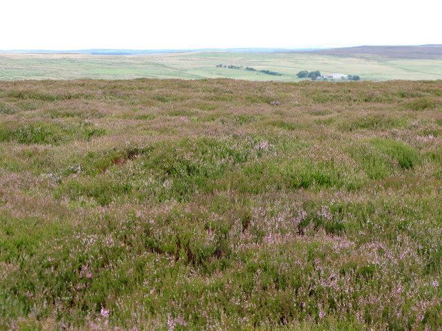 Moorland north of Black Hill