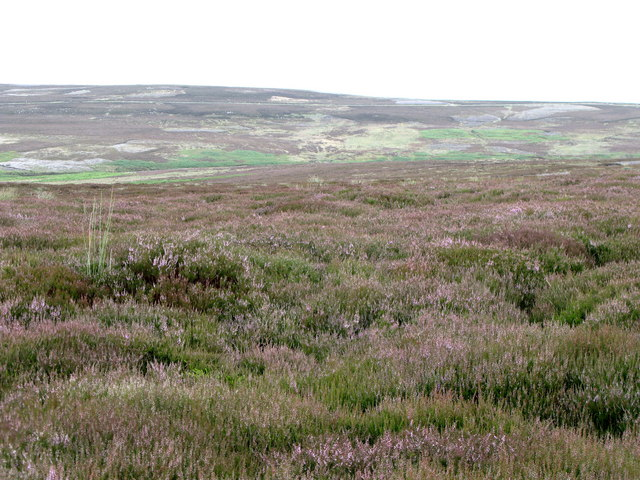 Moorland east of Black Hill