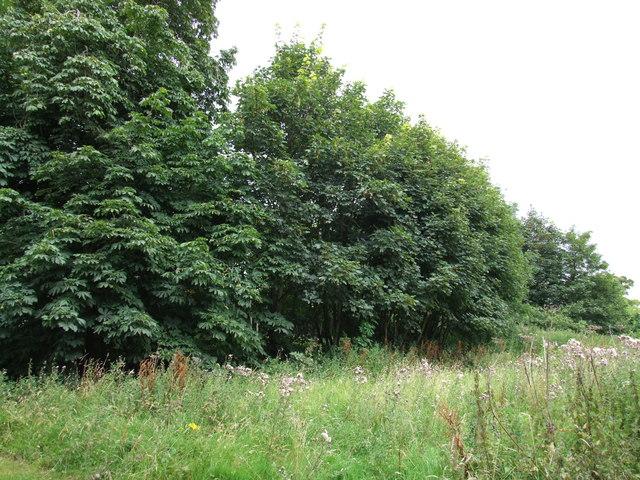 Field boundary, Moorby