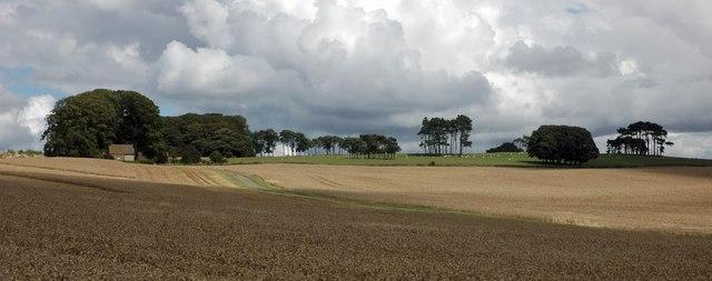 Pine trees and Lalu Farm, Bredon Hill