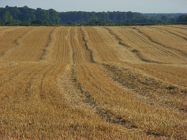 Farmland, Littlewick Green