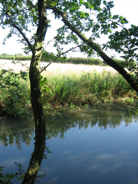 Pond in field corner next to Honeypot Wood