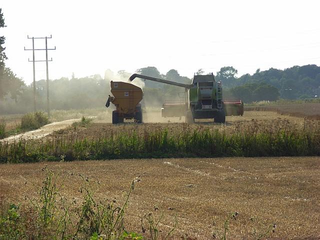 Harvest at Littlewick Green