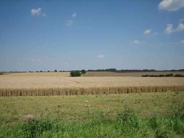 Horizontal wheat fields stretching to the horizon