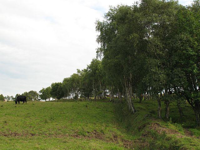 Farmland, Bridgend