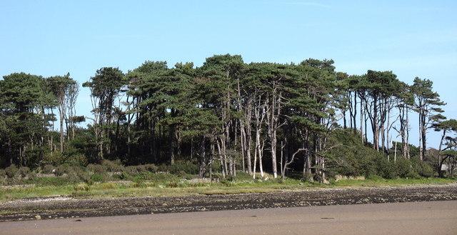 Coed Plas Penrhyn Woodland