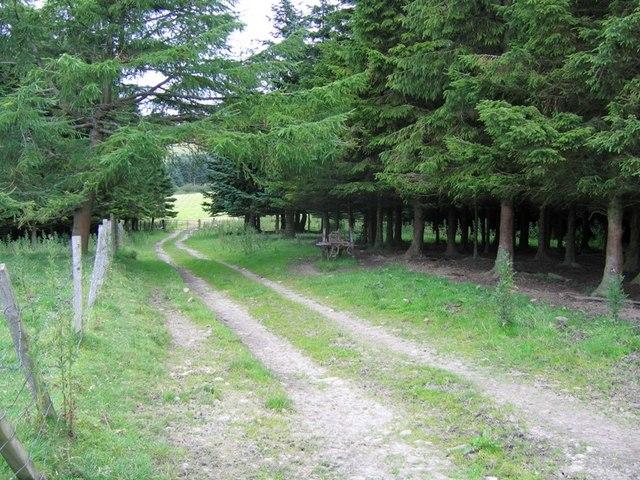 Farmtrack through a small wood