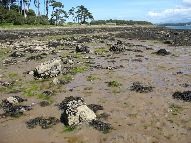 Glacial deposits exposed at low tide.