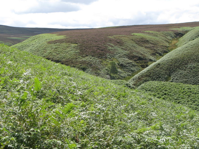The valley of Eudon Burn