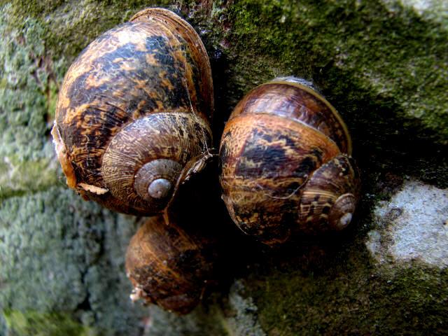 Snails on gravestone
