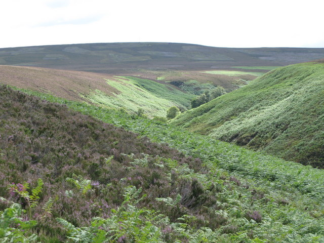 The valley of Eudon Burn (3)