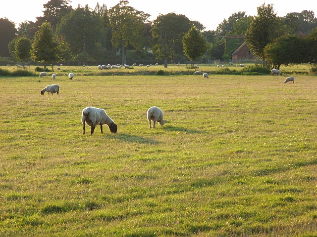 Pastures, Waltham St Lawrence