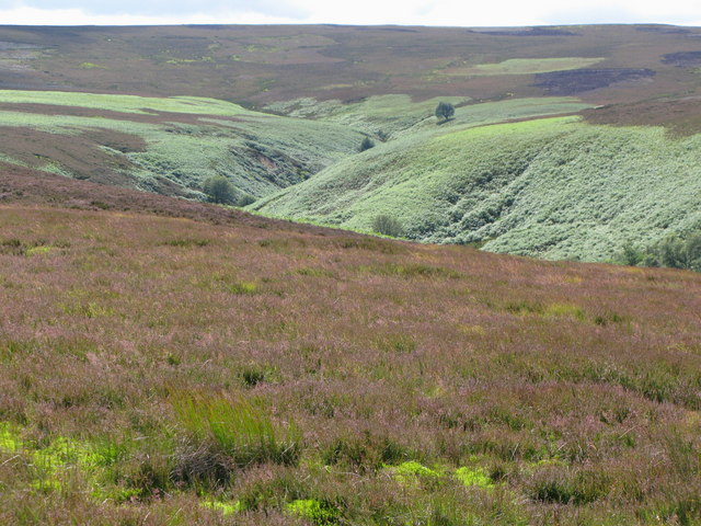 More moorland above the Eudon Burn