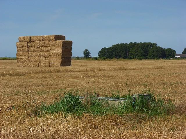 Farmland, Shrewton