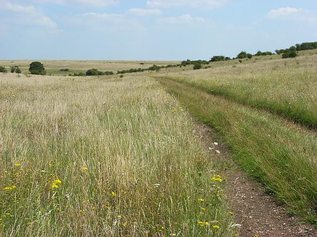 Downland in Larkhill Artillery Range