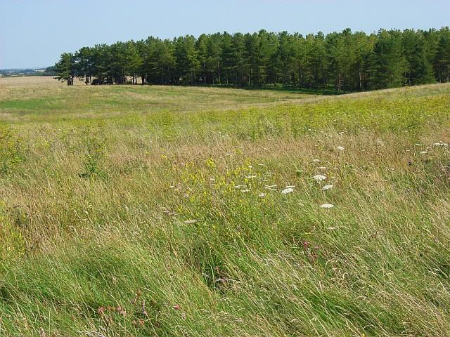 Copse and downland above Orcheston