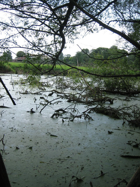 Neglected pond to north of Beeston