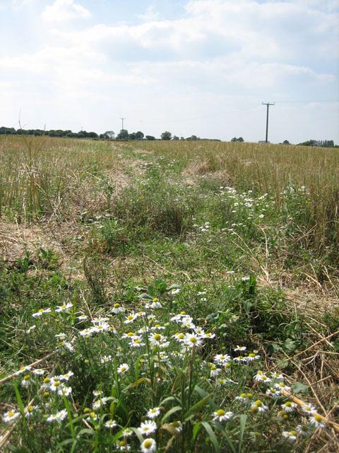 Cross-field path to Godwick