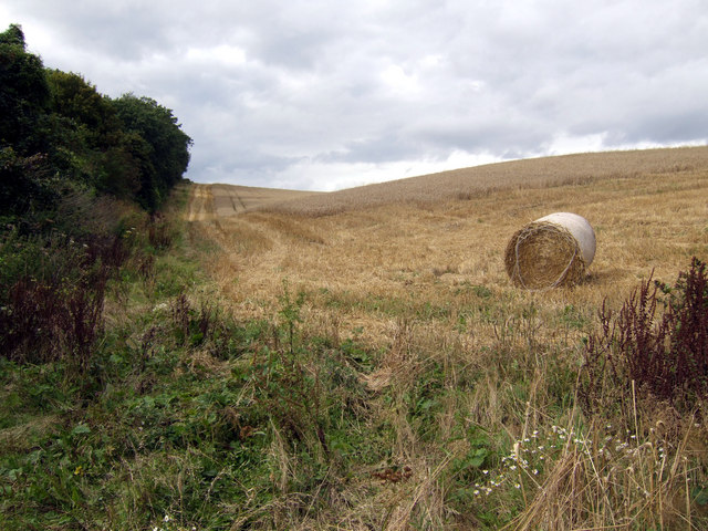 Harvested field on Windmill Hill