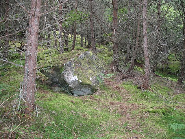Boulder and forest