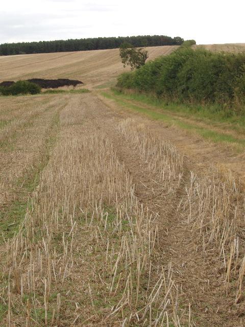Cut rape and wheat fields, Yardley Hastings