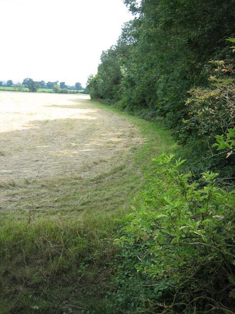 View along edge of Horningtoft Wood