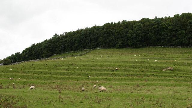 Cultivation Terraces near Marske