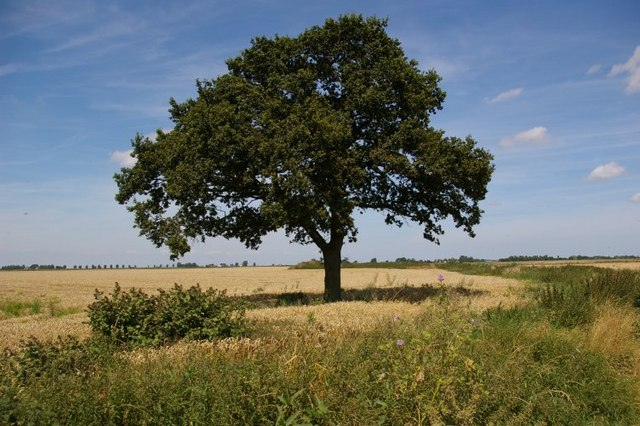 Arresting tree in field