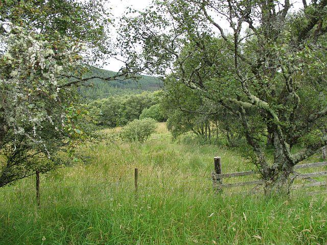 Meadows near Tombain