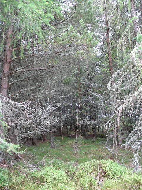 Cragganmore Wood