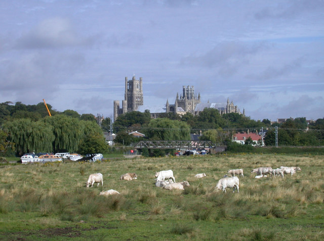 A herd of cows. Oh, and a cathedral.