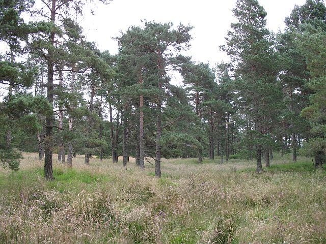 Blairmore Plantation