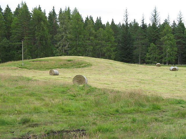 Winter fodder, Tomvaich