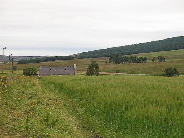 Barley, Delliefure