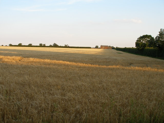 Evening shadows across the field of gold