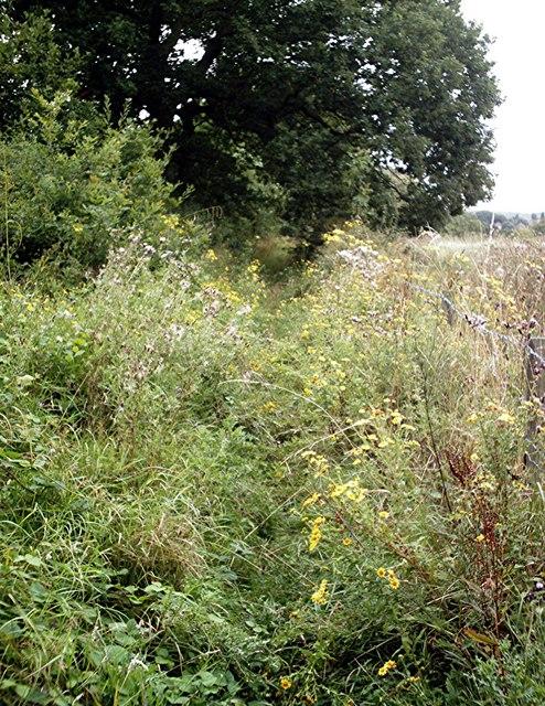 Overgrown footpath