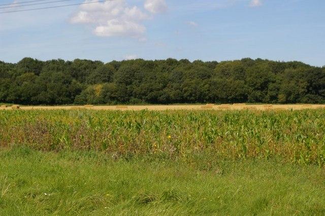 View across field