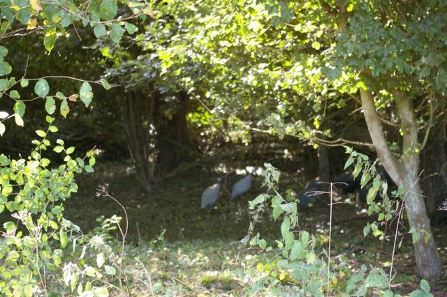 Birds in woodland clearing